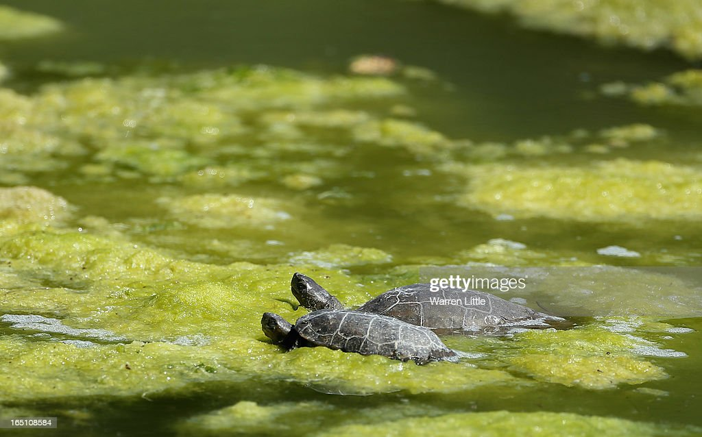 Local wildlife take in the sun during the third round of the Trophee du Hassan II at Golf du Palais Royal on March 30, 2013 in Agadir, Morocco.