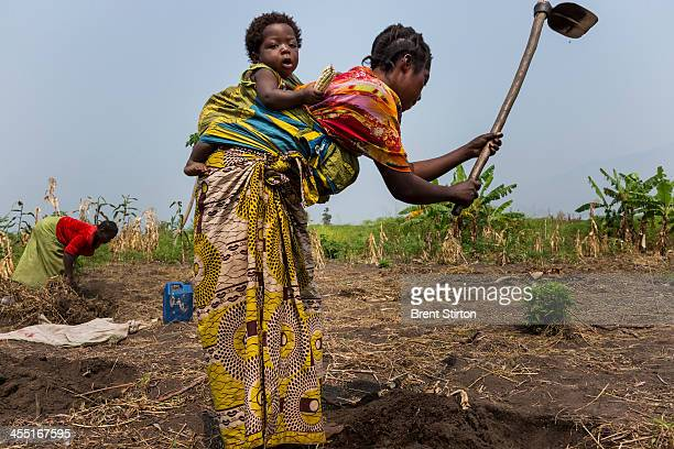 Local women prepare a Kasava field in the West Lake Edward village of Lunyesenge on July 29 2013 in DR Congo Villagers of this region rely heavily on...