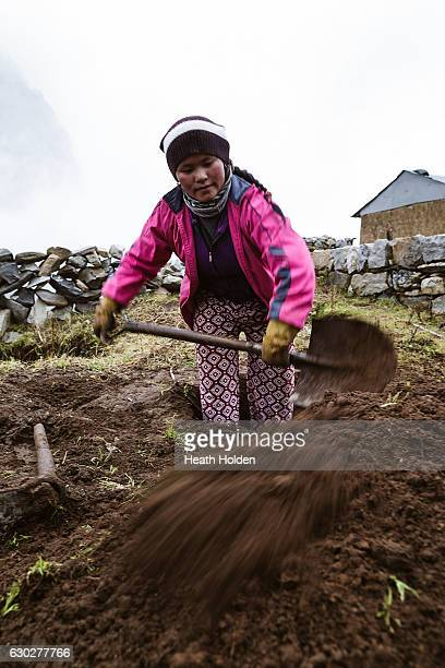 Local women working in the field prepering the ground to plant vegetables on September 24 2016 in Lungden Nepal The trails in the SoluKhumbu region...