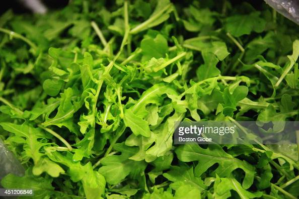 Locally grown arugula at Baldor Boston in Chelsea Wednesday June 18 2014