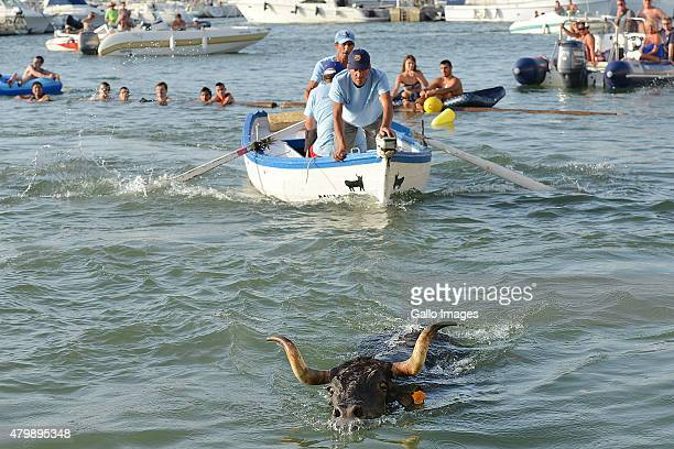 Locals and tourists take part in the 'Toros Al Mar' on July 7 2015 in Denia Spain 'Toros la Mar' is part of the folk festival 'Santisima Sangre' The...