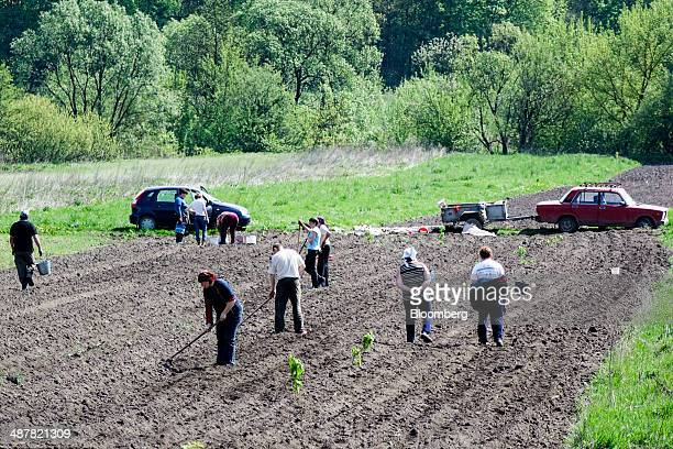 Locals hoe the earth and plant seed crops in a field in the countryside outside Ternopil Ukraine on Friday May 2 2014 The US is the top wheat shipper...