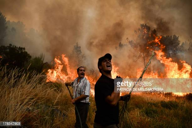 Locals shout as they try to extinguish a wildfire in Caramulo central Portugal on August 29 2013 Five Portuguese mountain villages were evacuated...