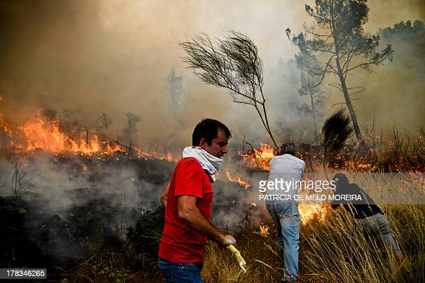 Locals try to extinguish a wildfire in Caramulo central Portugal on August 29 2013 Five Portuguese mountain villages were evacuated overnight as...