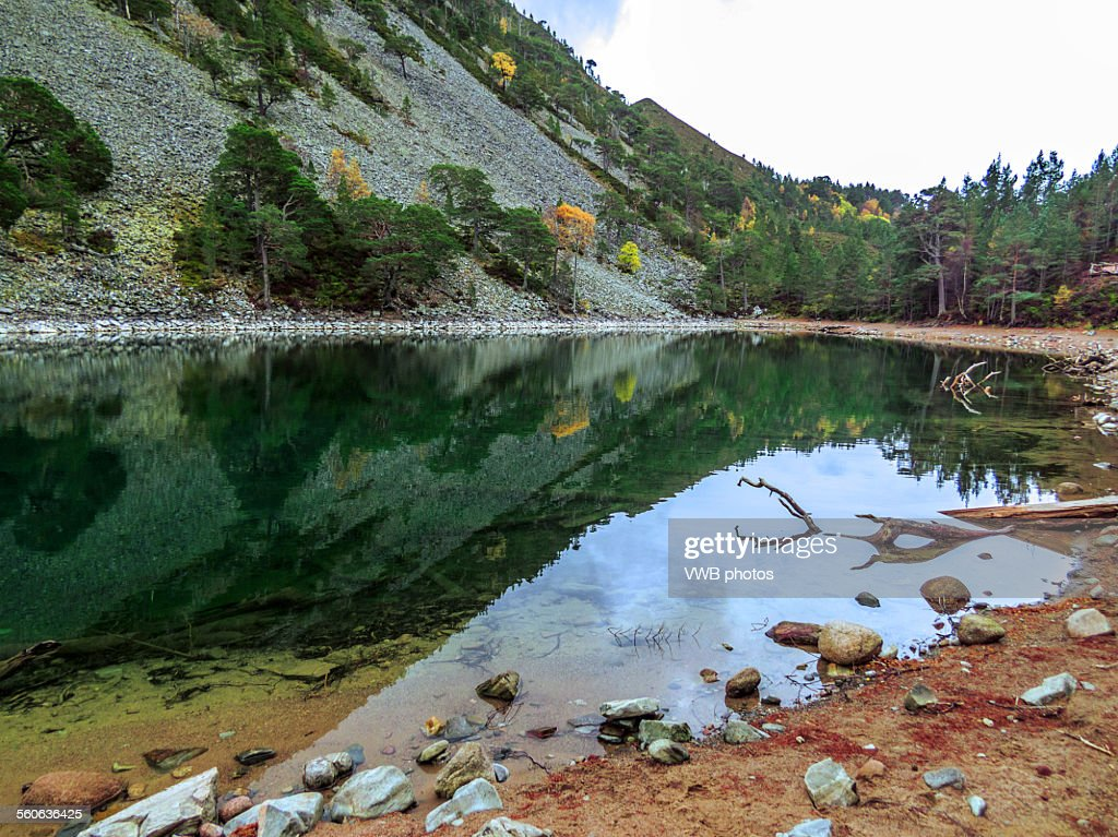 Lochan Uaine, Glenmore Forest Park