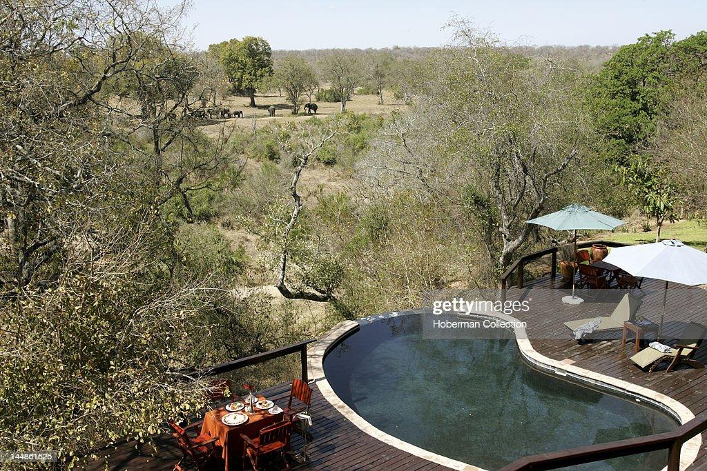 Lodge Pool Elephant Plains Sabi Sabi Greater Kruger National Park Mpumalanga South Africa Africa