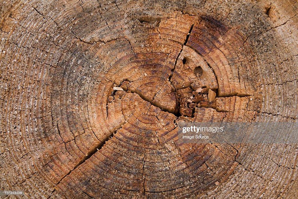 Log, close up : Stock Photo