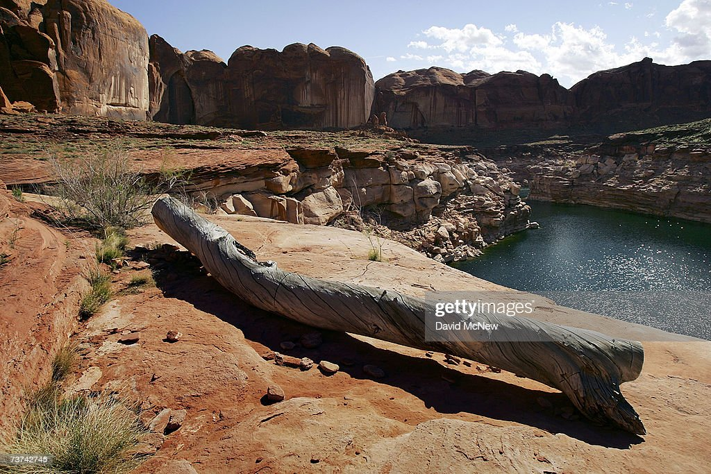 A log deposited when the lake was full are left high above the current water level in Llewellyn Gulch canyon where no trees grow on Lake Powell on March 27, 2007 near Page, Arizona. Lake Powell and the next biggest Colorado River reservoir, the nearly 100-year-old Lake Mead, are at the lowest levels ever recorded. Environmentalists have long-lamented the damming of scenic Glen Canyon, the eastern sibling of the Grand Canyon, in the early 1960's to create the 186-mile-long Lake Powell. The US Bureau of Reclamation is evaluating four proposals to manage the drought on the Colorado River which supplies water and power to millions of people in the western states. The bureau has warned that shortages are possible as early as 2010. If the water drops too far, power generators at the dams will become inoperable.