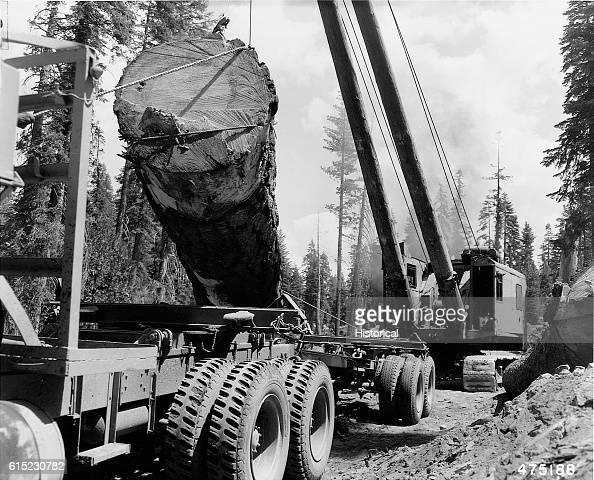 A log loading crane places a large log onto the back of a truck Eldorado National Forest California August 14 1953 | Location WetselOviatt Sale Bark...