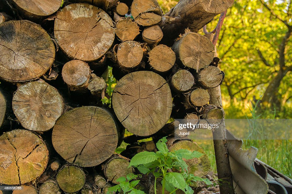 Log pile in nature : Stock Photo