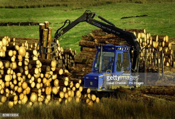 A logger piles wood taken from a forest in the Scottish Borders Scotland is the most wooded area in the UK and one of the fastest expanding areas of...