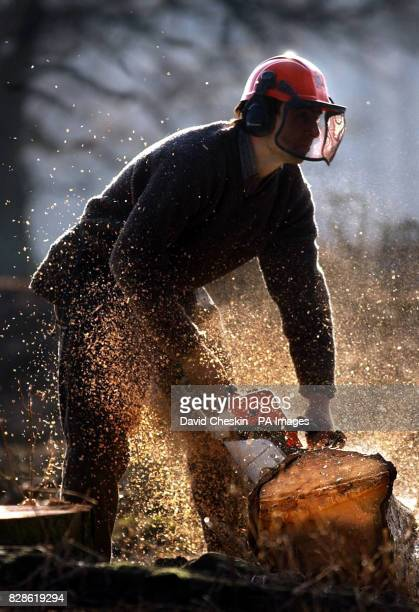 A logger starts work cutting up trees at a forest in the Scottish Borders Scotland is the most wooded area in the UK and one of the fastest expanding...