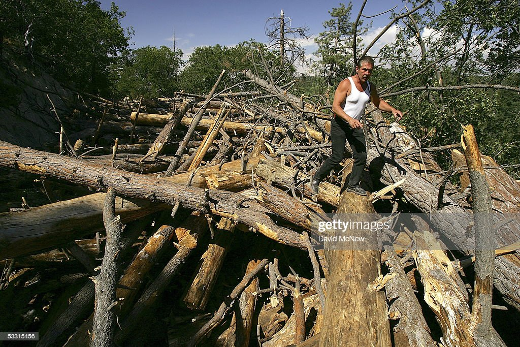 Logger Steve Johnson walks over hundreds of trees that are piled on top of closed State Highway 173 which is normally one of only three major evacuation routes out of the area on August 1, 2005 near Lake Arrowhead, California. The trees, killed by a plague of pine beetles, are being removed as an emergency action to lessen a dangerous wildfire threat but Johnson complains that blocking the highway is a threat to residents. Last winter was one of the wettest on record, dropping 90 inches of rain in some southern California mountain areas and creating the thickest vegetation growth in memory, and damaging more than 2,000 miles of fire access roads used to protect 2.3 million acres of forests. In addition to the many thousands of trees killed by a massive pine beetle infestation, newly grown vegetation is drying up under triple-digit temperatures and raising fears of a repeat of the devastating fire season of 2003. President Bush signed an emergency funding bill in May allocating $25 million to fix roads in southern California?s national forests but Congress has acted slower than expected in providing the money so some of the repairs might not be done until October.