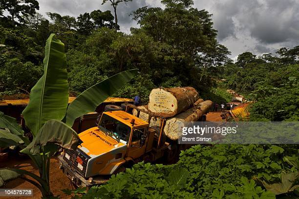 Logging roads and subsequent small towns created by logging concessions are bringing man and infrastructure further into the forest of Cameroon than...