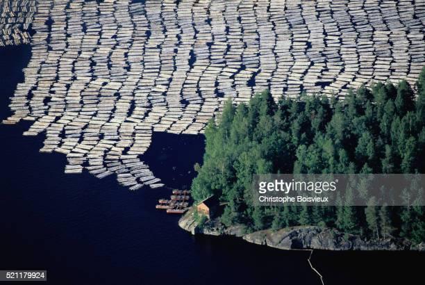 Logs Floating on Lake