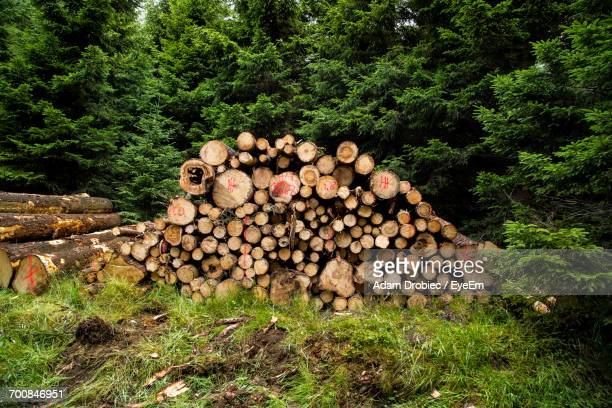 Logs Of Wood Against Trees On Grassy Field In Forest