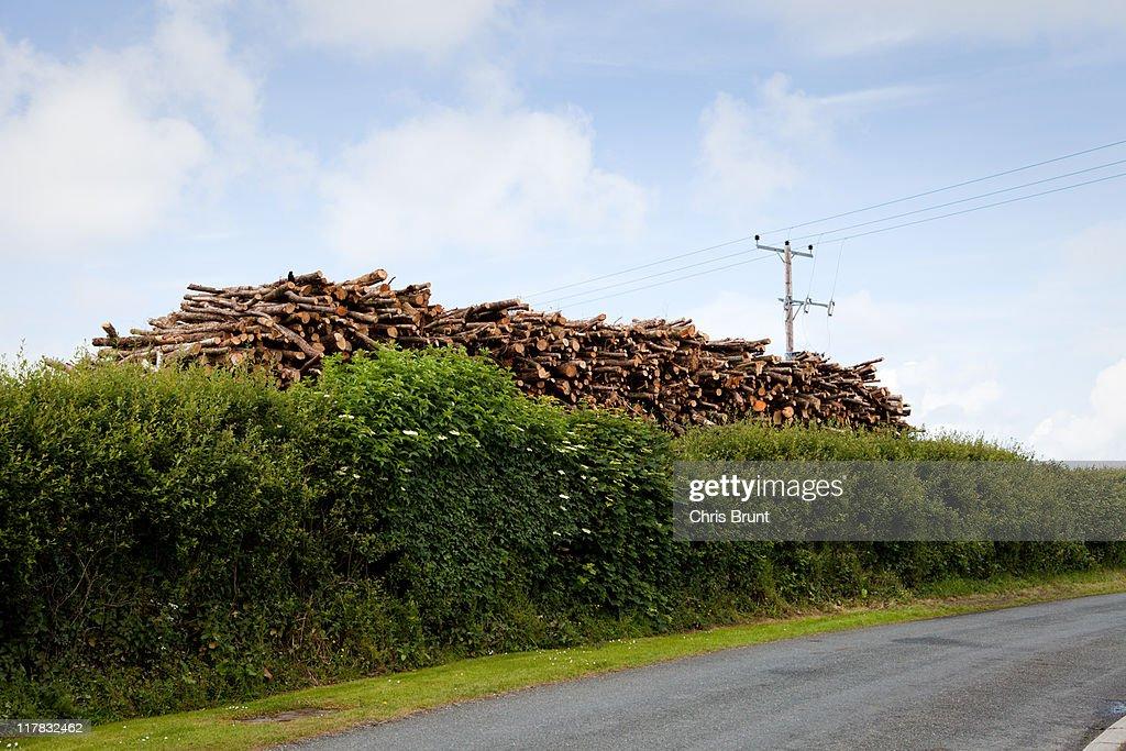 Logs : Stock Photo