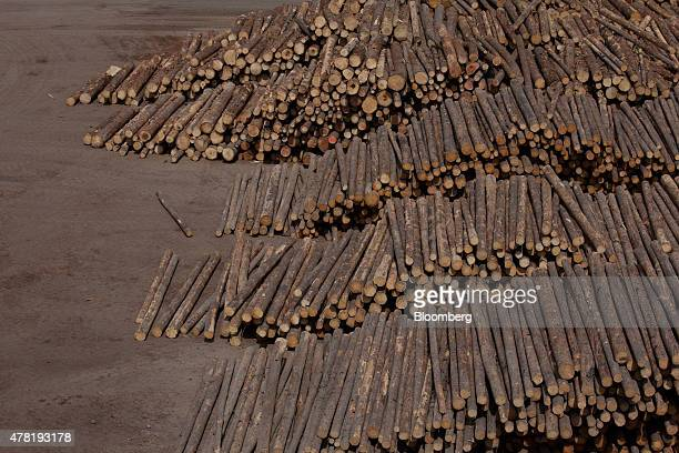 Logs sit in piles before being processed at the West Fraser Timber Co sawmill in Quesnel British Columbia Canada on Friday June 5 2015 Since the late...