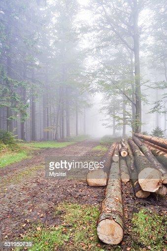 Protokolle Bäumen : Stock-Foto