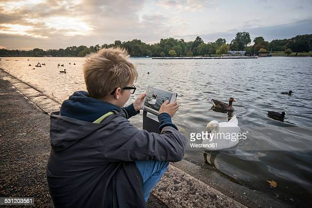 UK, London, boy photographing water birds at Hyde Park with his digital tablet