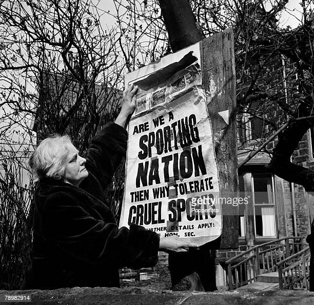 London England A lady protestor puts up an anticruel sports poster on a tree