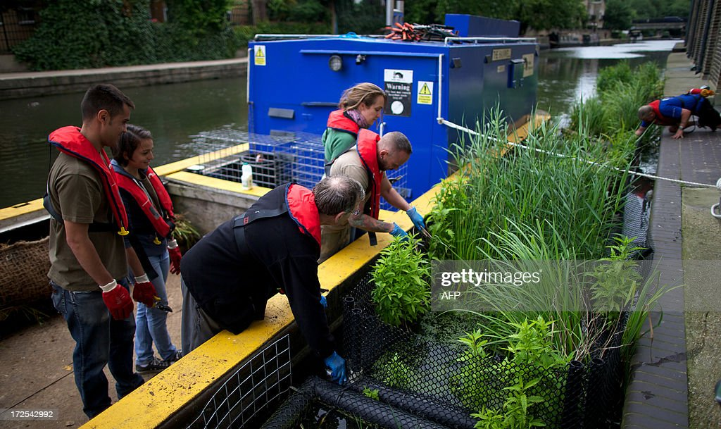 London Wildlife Trust volunteers help lay and repair a floating meadow along the Regents canal, which when finished the meadow will hopefully help the bee population, in North London on July 3, 2013.