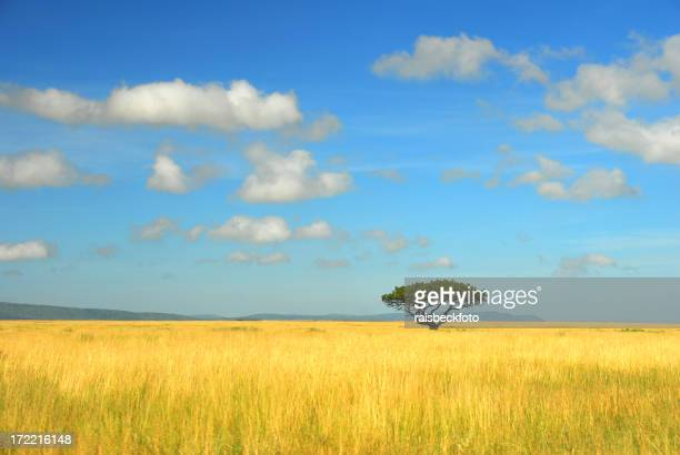 Lone Acacia in the Serengeti Plain, Tanzania