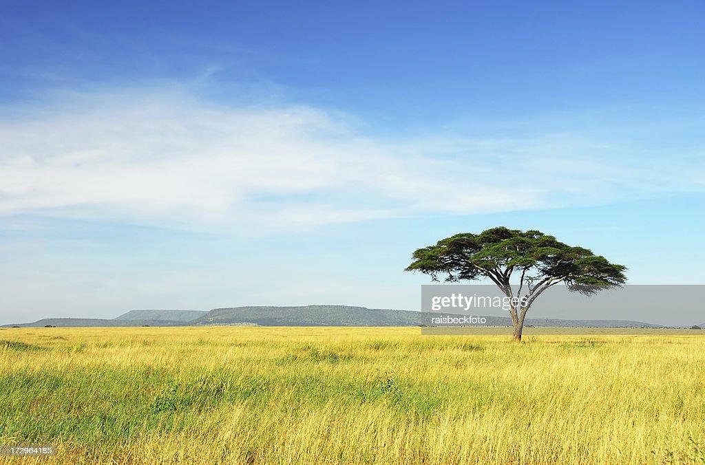 'Lone Acacia Tree, Serengeti National Park, Tanzania'