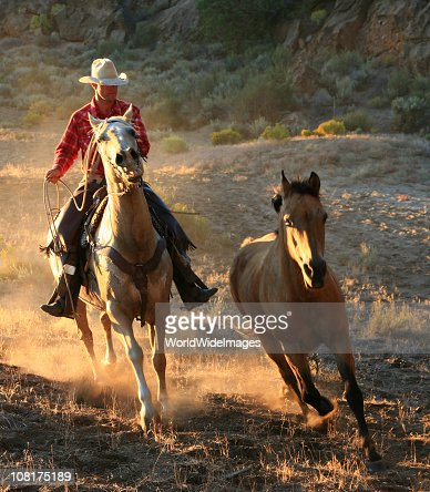 Lone Cowboys after wild stallion
