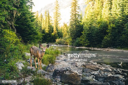 Lone deer in a forest. : Stock Photo