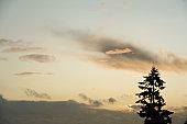 Lone fir