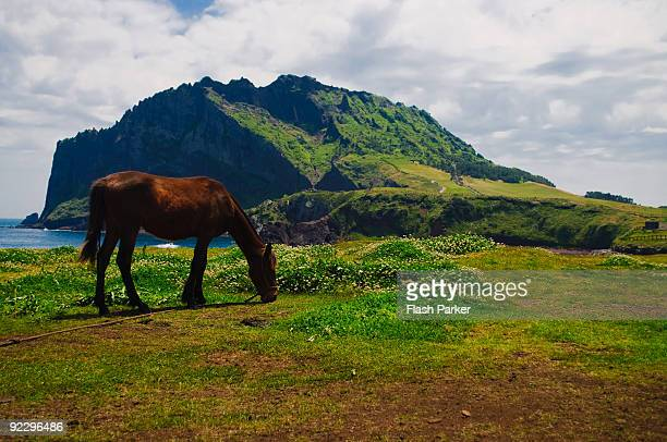 Lone Horse and Seongsan Ilchulbong