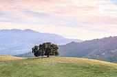 Pleasanton Ridge Regional Park, Alameda County, California, USA.