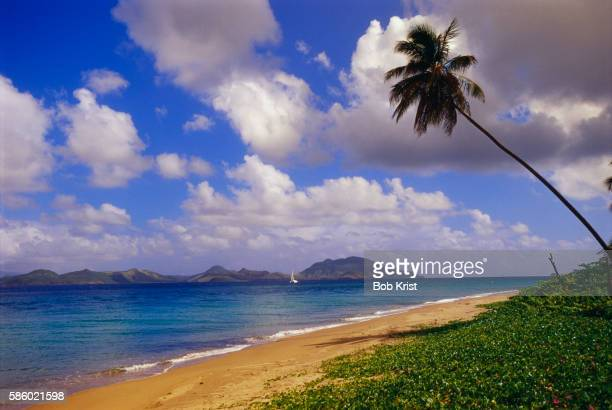 Lone Palm Tree on Pinney Beach