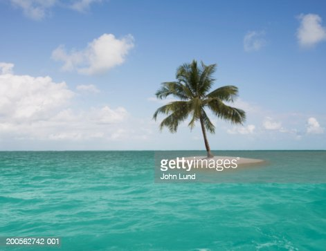 Lone palm tree on small island