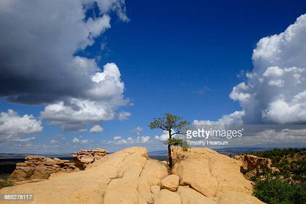 Lone pine tree grows out of rock formations