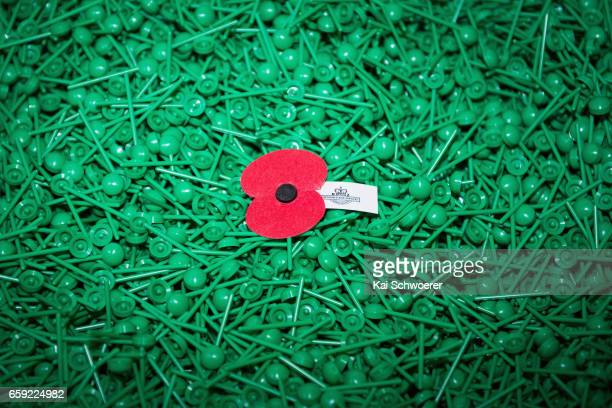 A lone poppy sits amongst a box of stems at the Royal New Zealand Returned and Services' Association Poppy Factory on March 27 2017 in Christchurch...