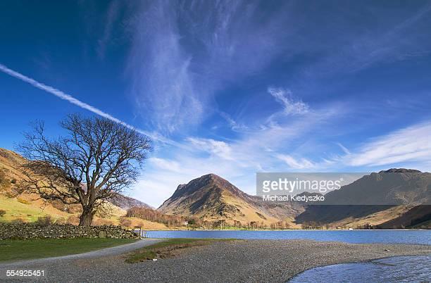 Lone Tree At Buttermere Lake English Lake District