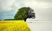 lone tree in all seasons - beautiful landscape in Romania