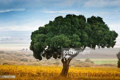 ローンツリーのカーメルヴァレイ
