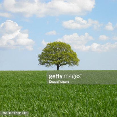 Lone tree in field : Photo