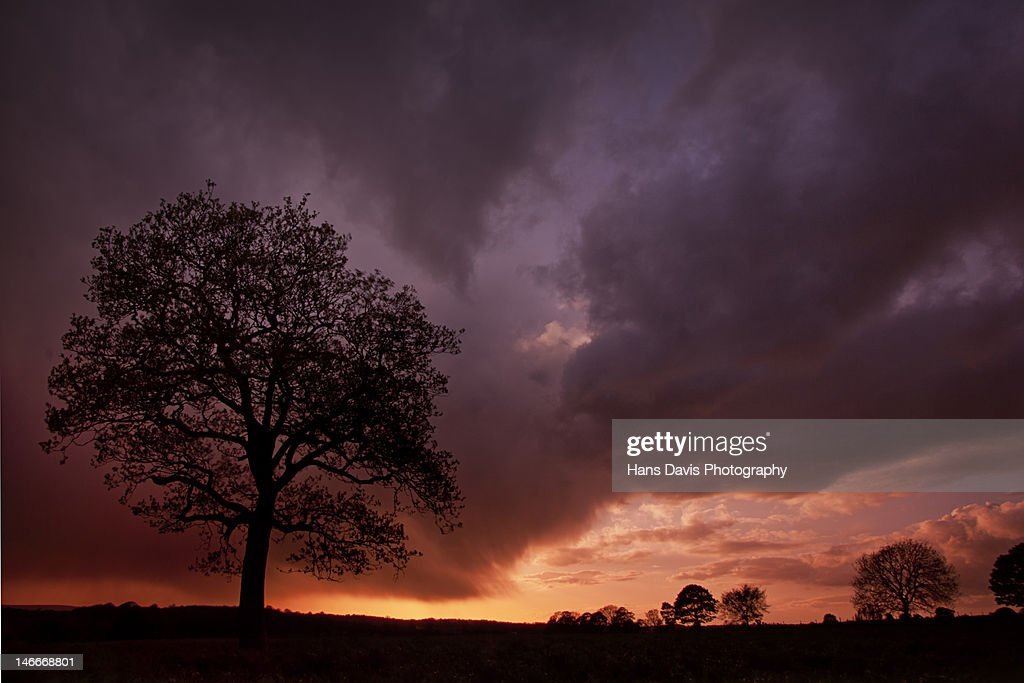Lone tree in grass field against storm clouds : Stock Photo