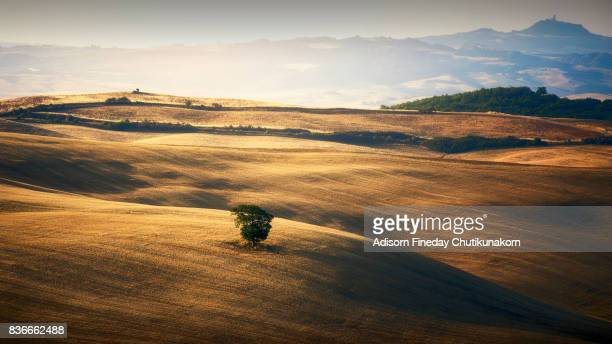 Lone tree in the Crete Sensei, Tuscany.