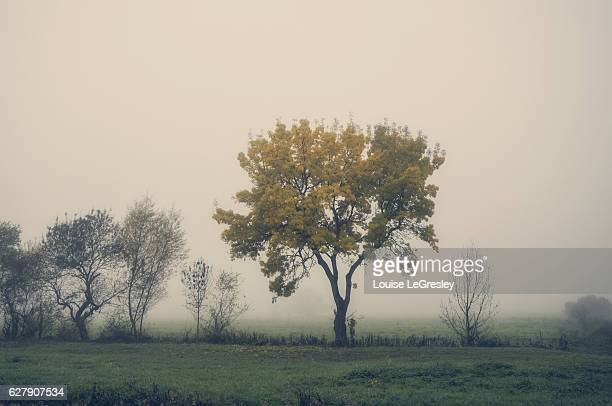 Lone tree on a beautiful foggy autumn morning