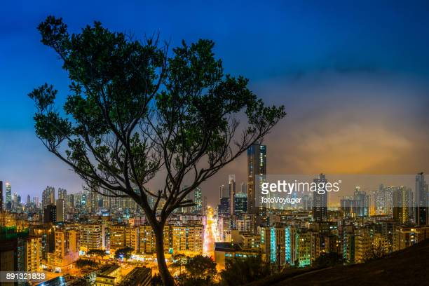 Lone tree overlooking futuristic neon night skyscrapers Hong Kong China