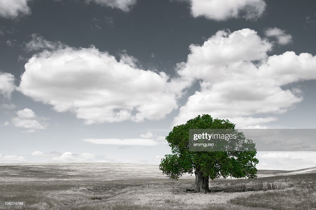 Lone Tree : Stock Photo