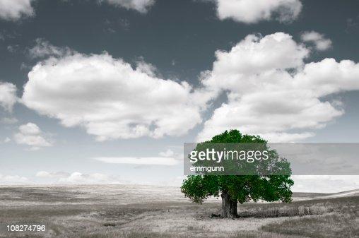 Lone Tree : Bildbanksbilder