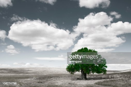 Lone Tree : Stockfoto