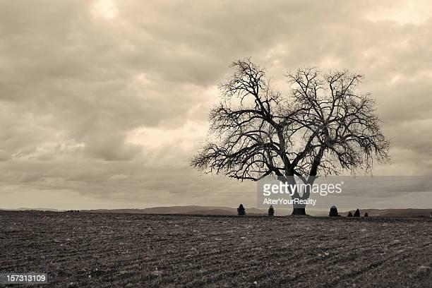 Lone tree series