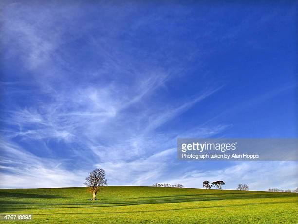 Lone tree with blue sky